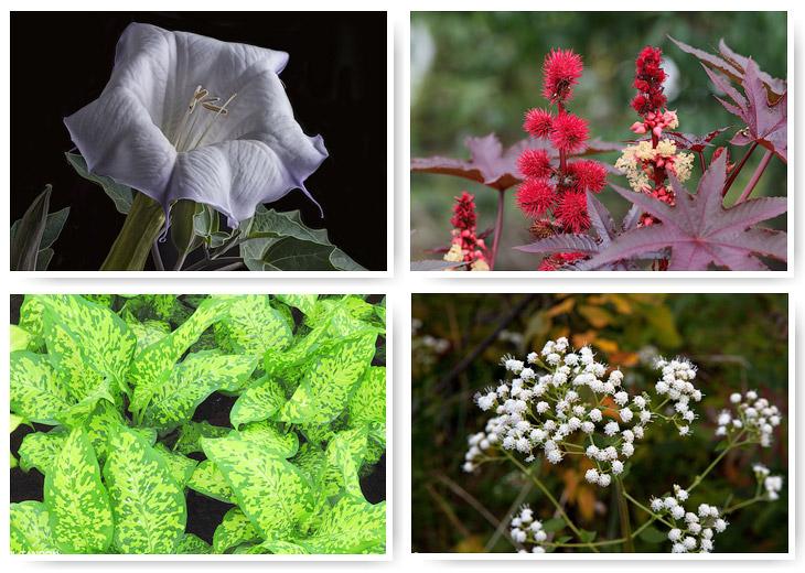 10 самых смертоносных растений мира