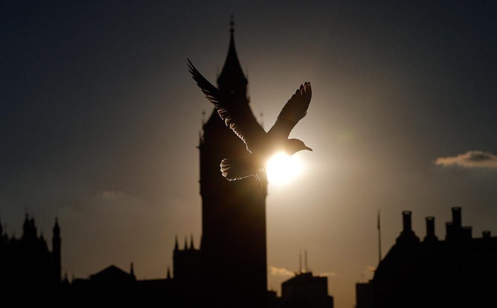 Чайка и Биг-Бен в Лондоне