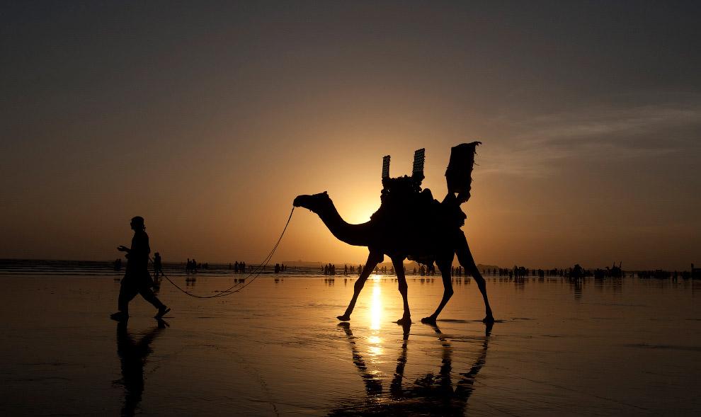 Господар зі своїм верблюдам