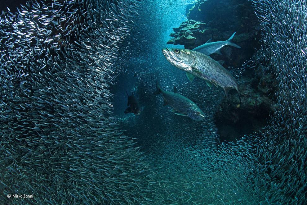 Косяки рыб