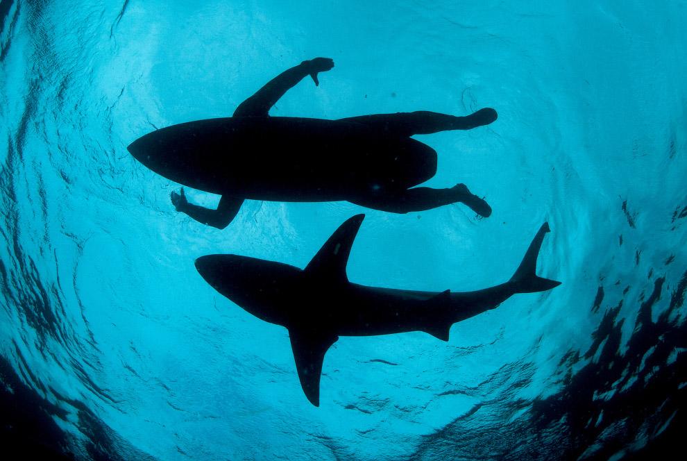 Акул и серфер