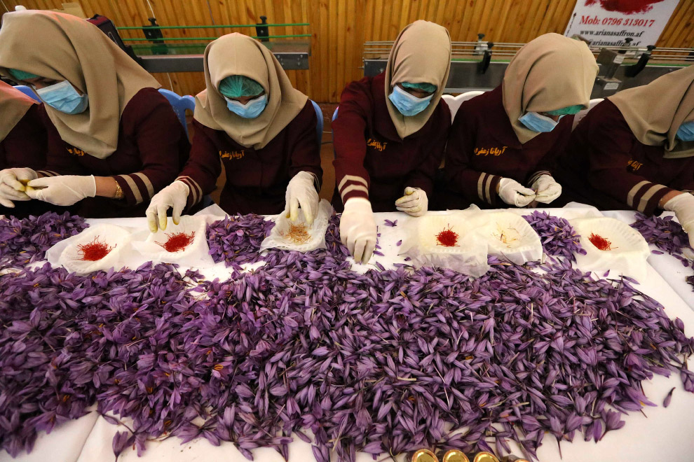 Шафран - самая дорогостоящая специя в мире