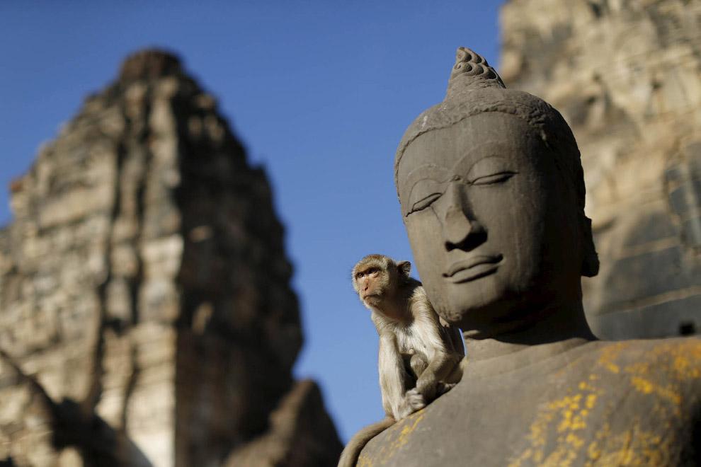 Макак в Храме Пранг Сам Йот в Таиланде