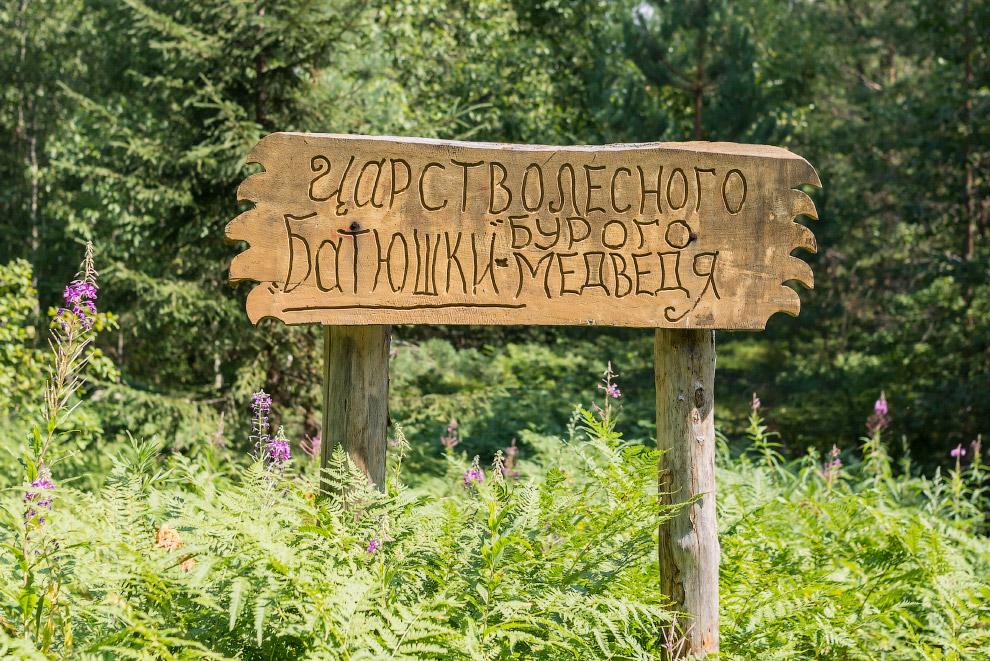 Центр спасения медведей в Тверской области