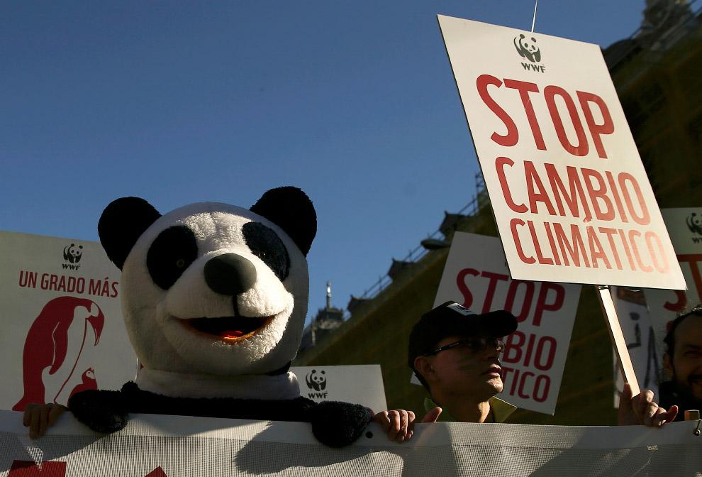 Панда требует остановить изменение климата