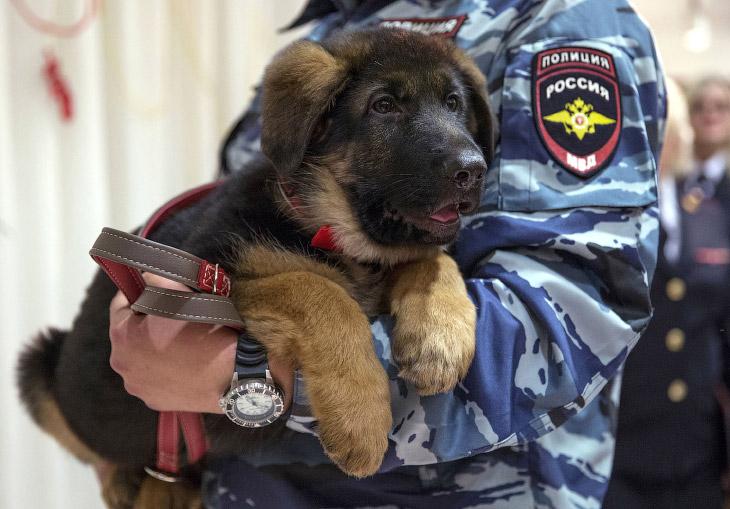 В ответ Россия преподнесла в дар Франции щенка Добрыня