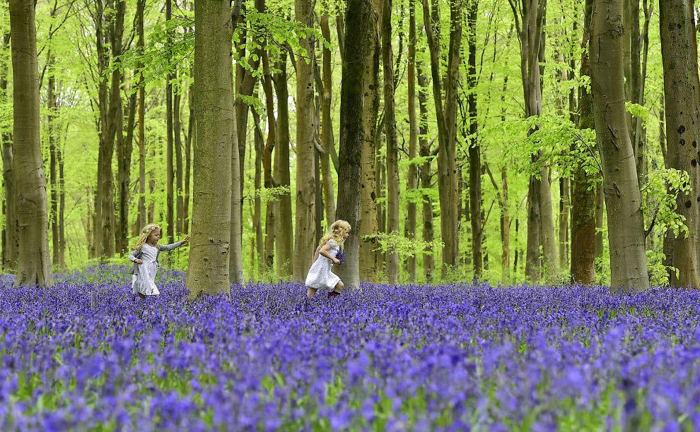 В лесу с колокольчиками в южной Англии