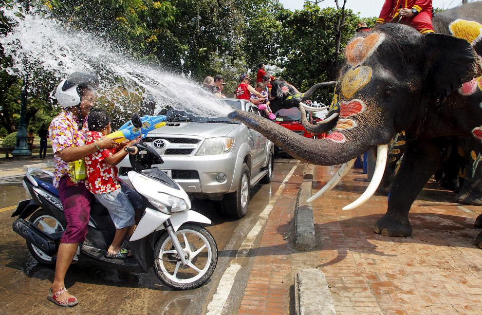 Веселуха со слонами в таиландской провинции Аюттхая