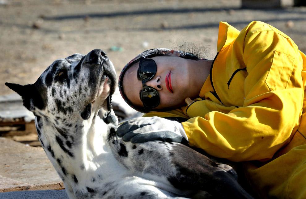 Волонтер приюта для животных и собака, Иран