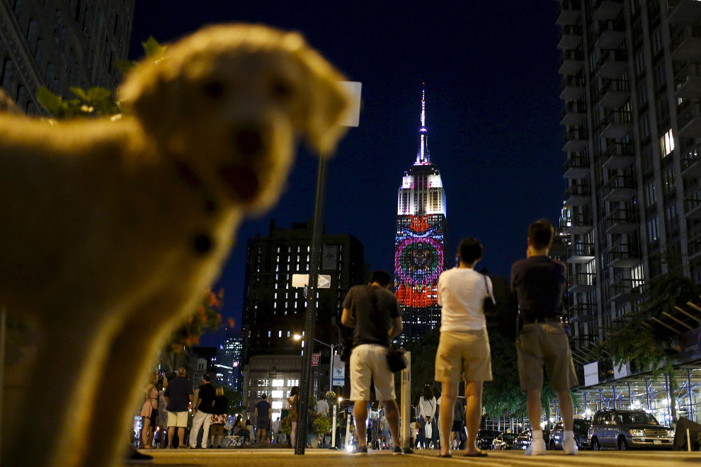 Собака и Эмпайр Стейт Билдинг в Нью-Йорке, США