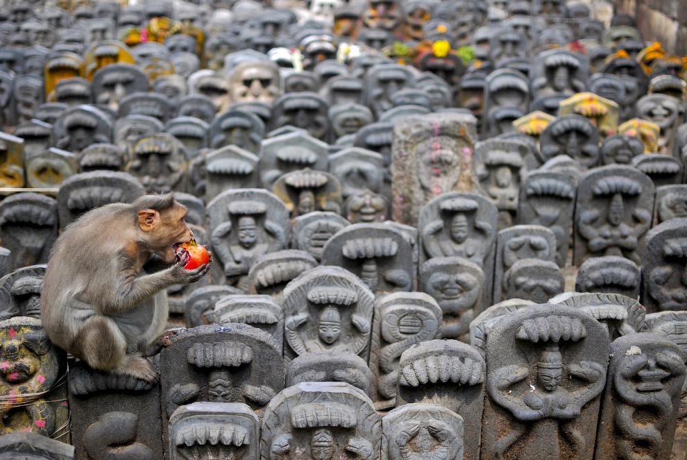 Макака в храме на окраине Бангалора, Индия