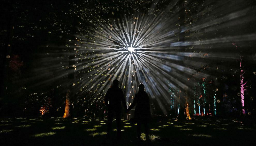 Новогодний дендрарий в Англии
