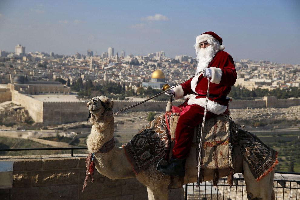 Санта Клаус на верблюде в Иерусалиме