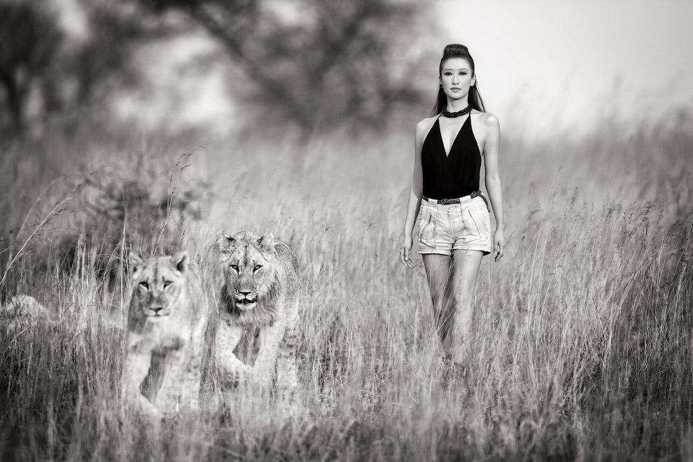 Львицы в Зимбабве