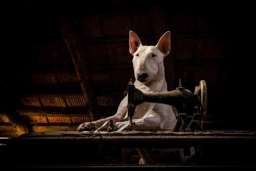 Dog explores abandoned buildings