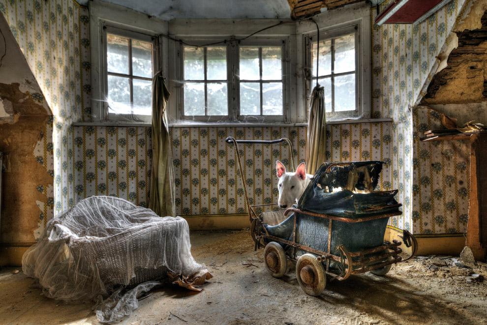 Бультерьер Клэр на заброшенной вилле в Бельгии