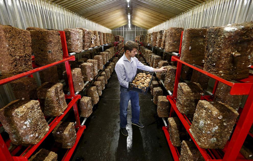Этот бывший бункер швейцарской армии недалеко от города Эрстфельд сейчас используется для выращивания грибов