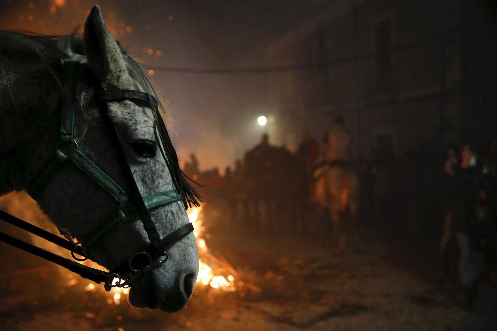 Огонь и лошади: День святого Антонио 2016