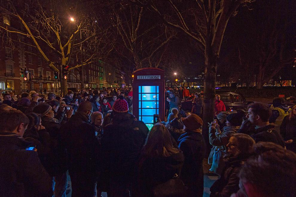 Знаменитая красная лондонская телефонная будка, в которой сделали настоящий аквариум с рыбами