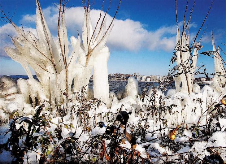 Ледяные растения на реке Миссисипи в штате Иллинойс
