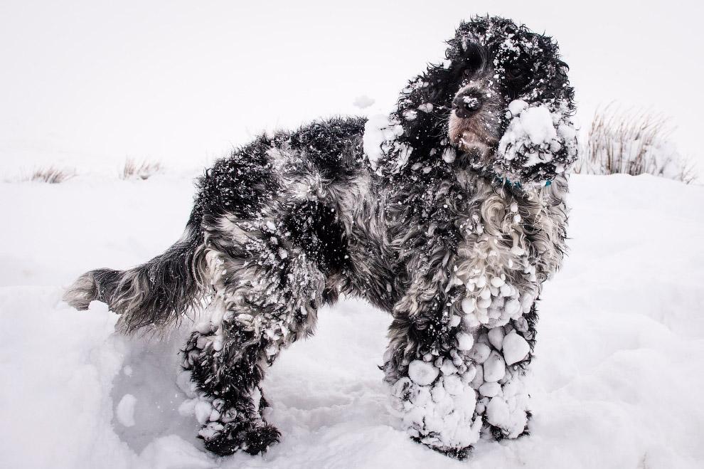 Навалялся в снегу