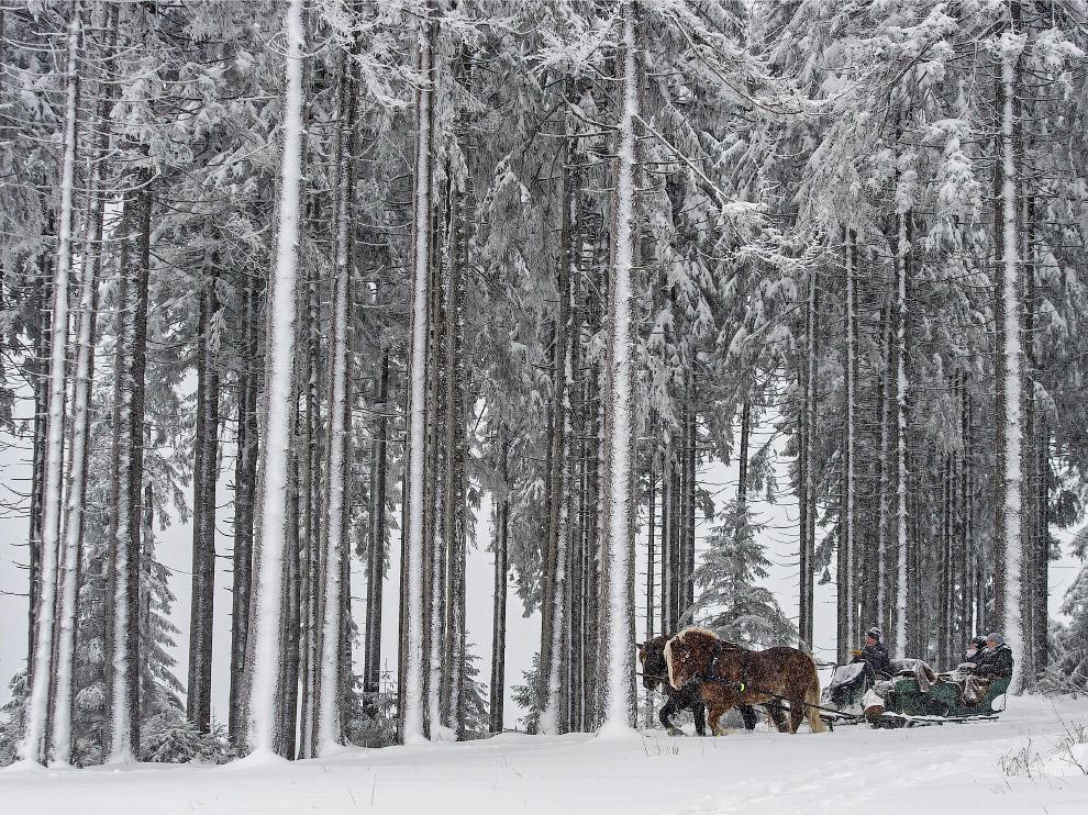 Зимняя прогулка на лошадях в Тюрингенском Лесу, Германия