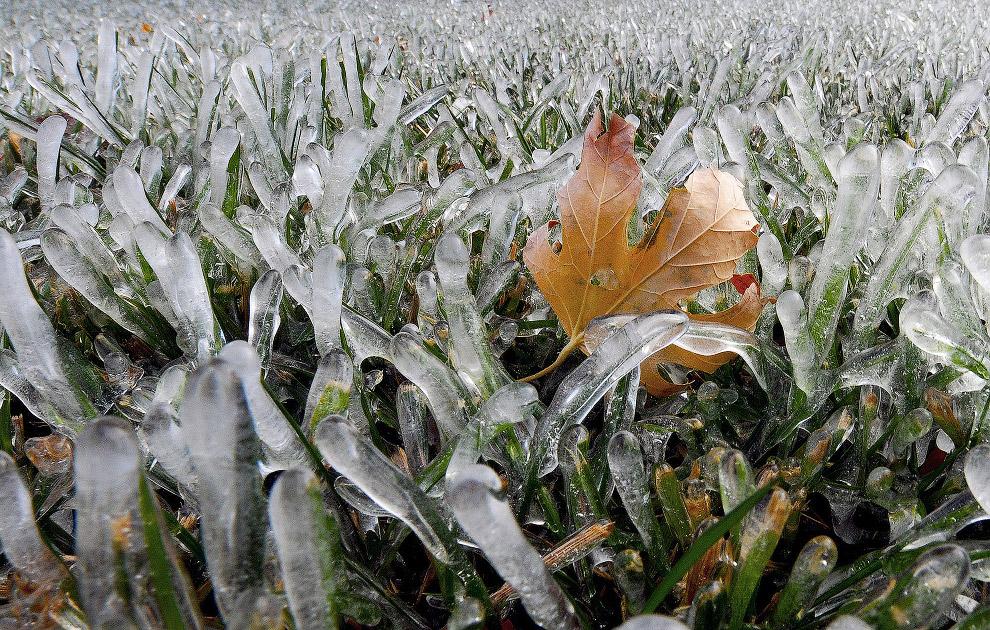 Сохранившийся замерзший кленовый лист