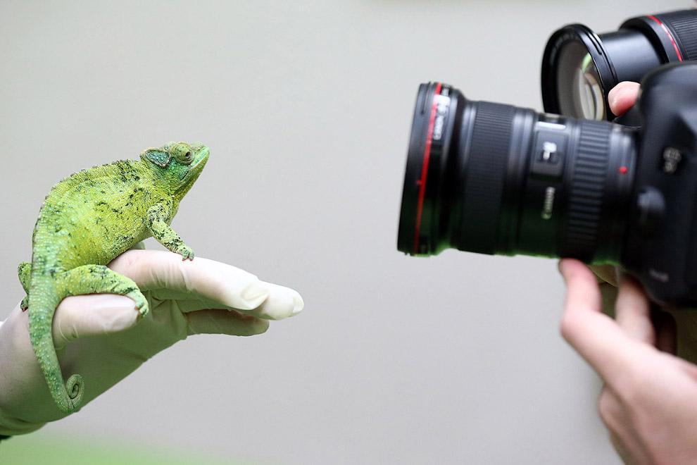 Модель – хамелеон