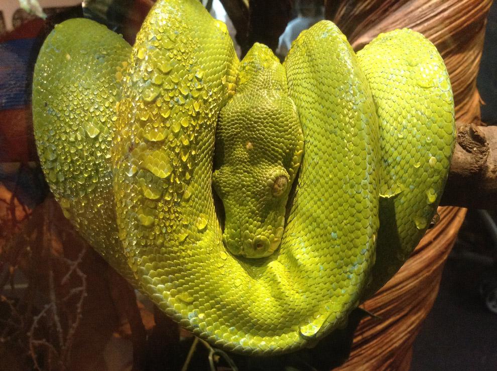 9-летний американец со снимком зелёной змеи
