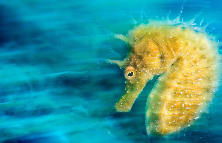 Победители конкурса подводной фотографии 2016