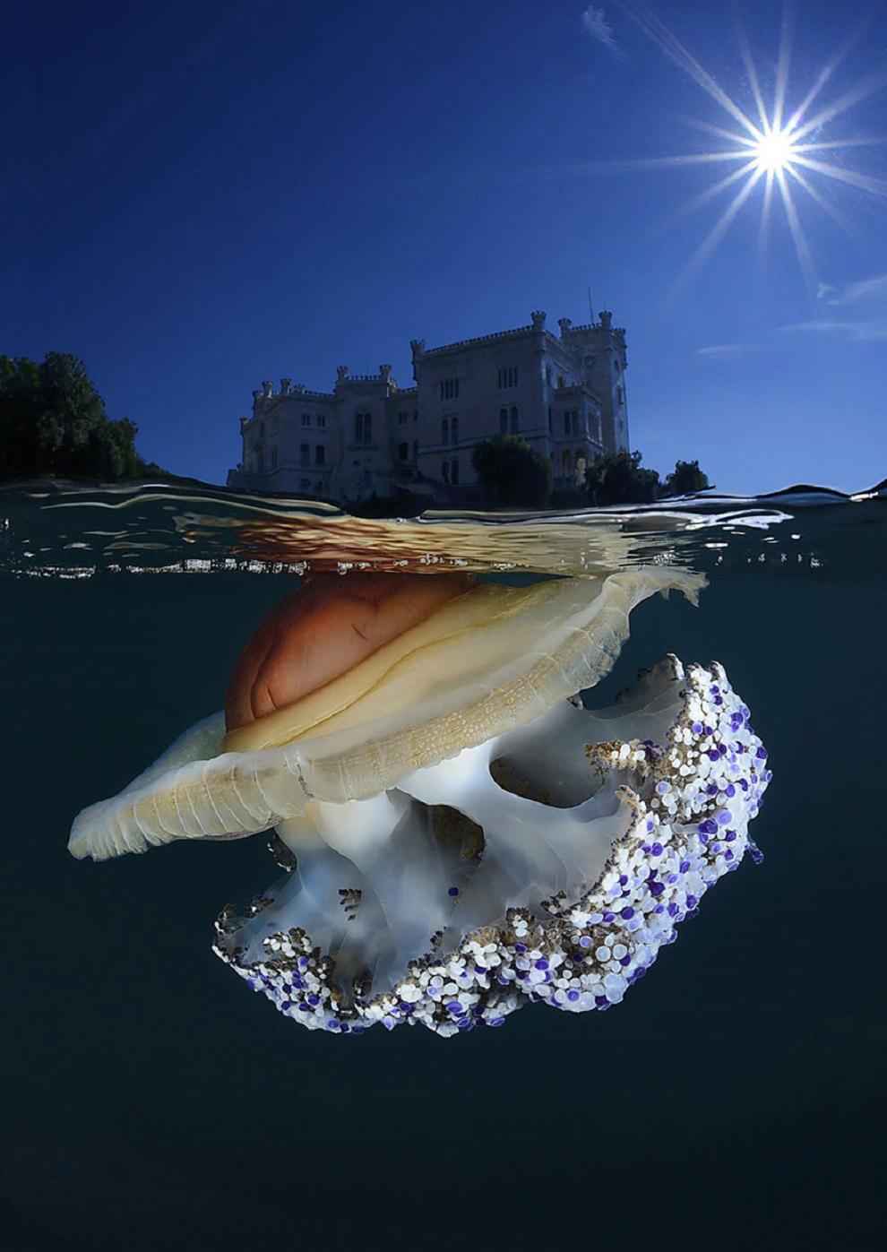 Медуза и замок