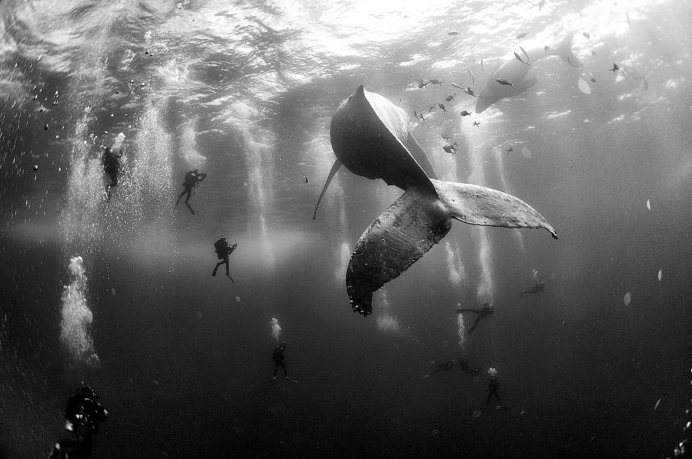 Кит возле группы островов Ревилья-Хихедо в Тихом океане
