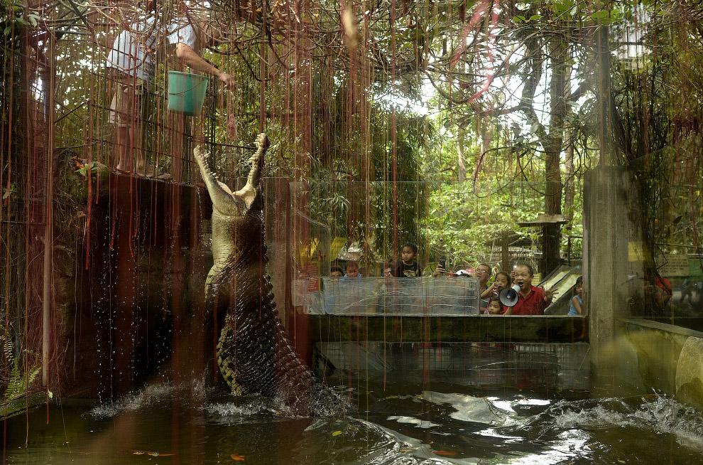 Крокодил по кличке Шакил в зоопарке в Маниле