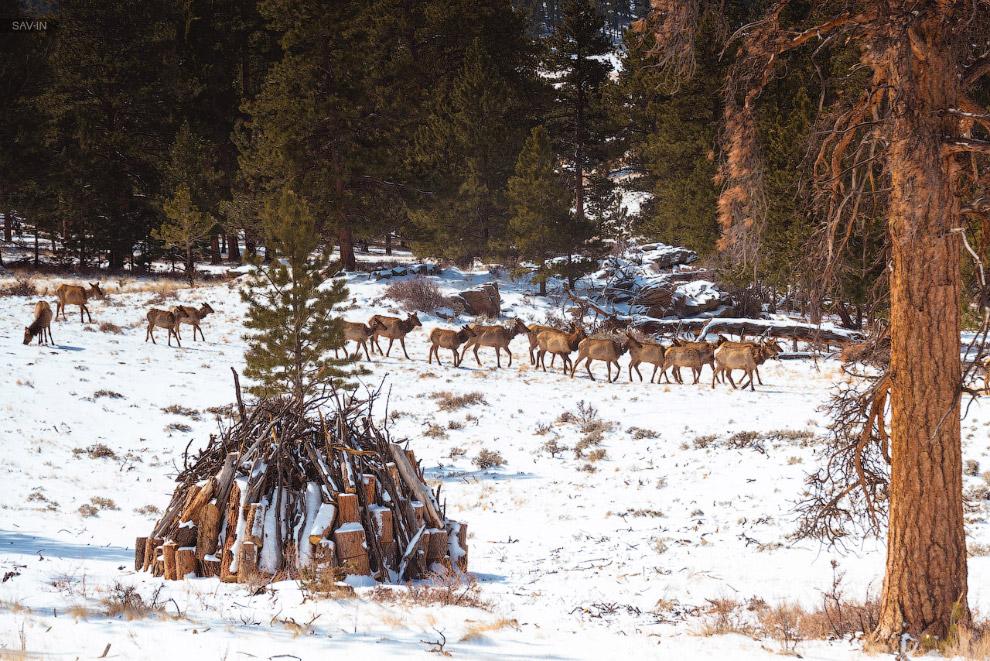 Национальный парк Rocky Mountain