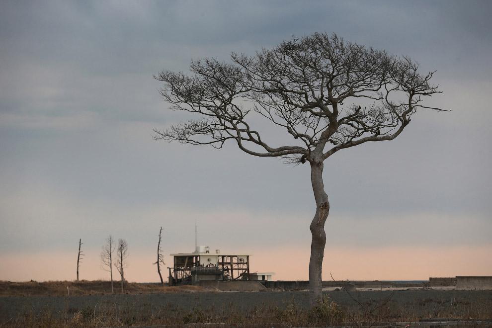 Разрушенный дом и пустошь внутри зоны отчуждения вокруг АЭС «Фукусима»
