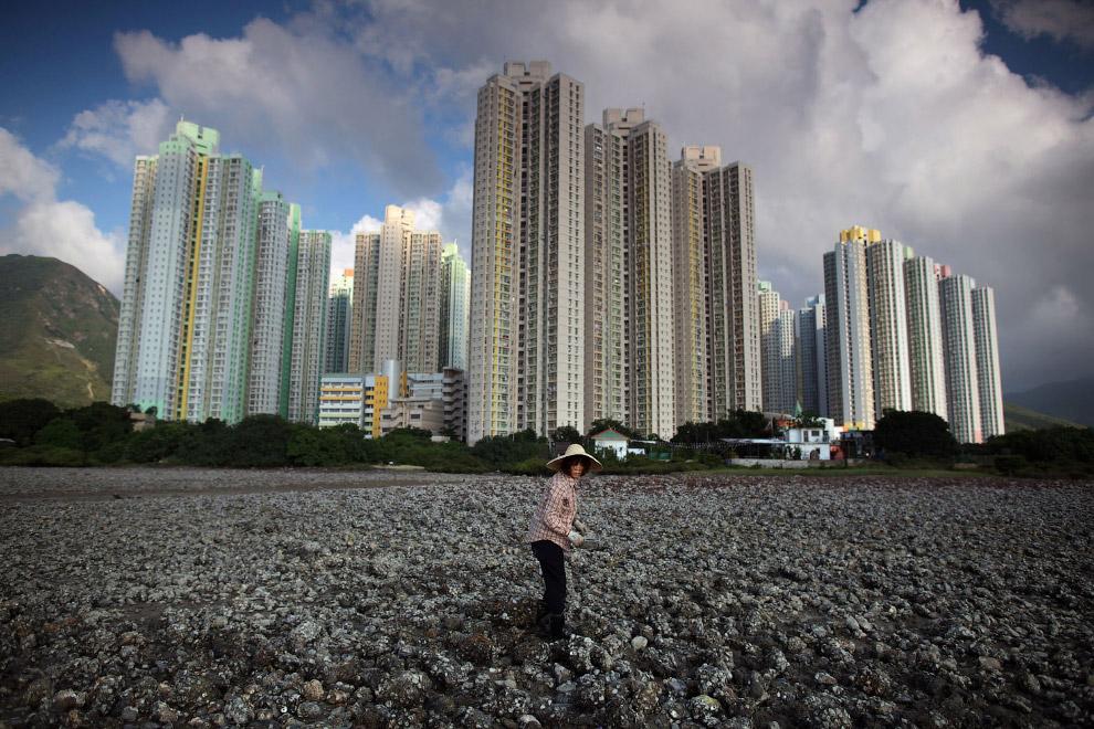 На берегу, рядом с жилыми кварталами, во время отлива на острове Лантау можно поискать моллюсков