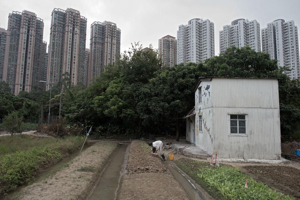 Огород и жилые небоскребы