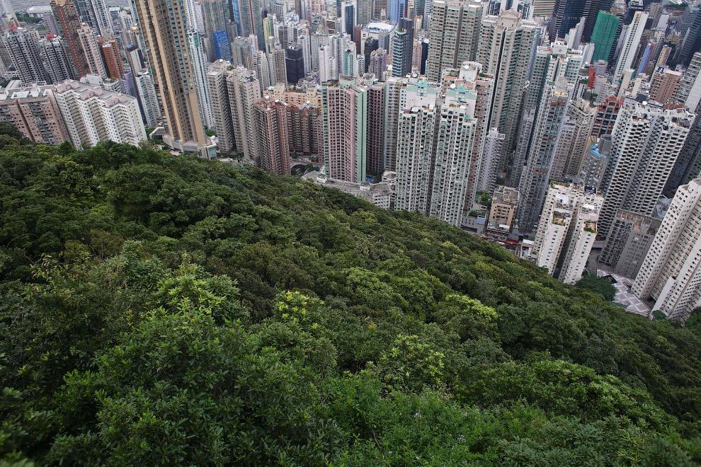 Зеленый островок на вершине
