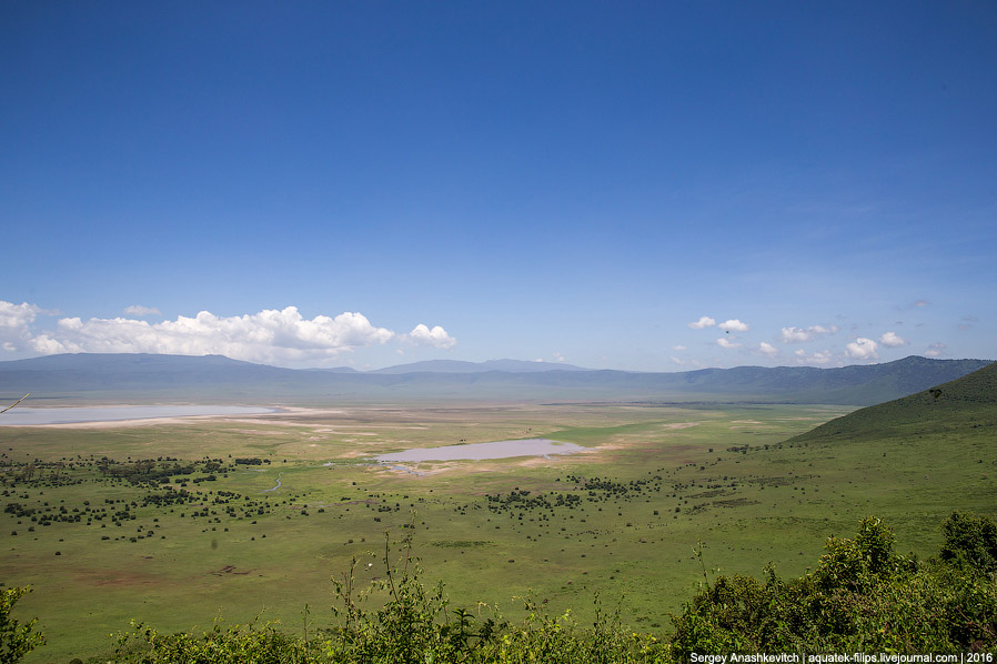 Сафари в кратере вулкана Нгоронгоро