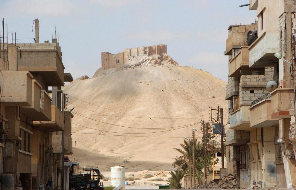 Впереди — цитадель древнего города Пальмира
