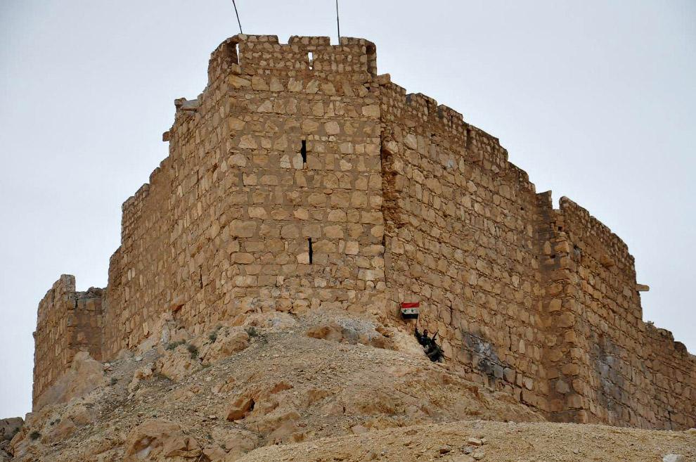 Сирийский солдат держит сирийский национальный флаг у цитадели Пальмиры