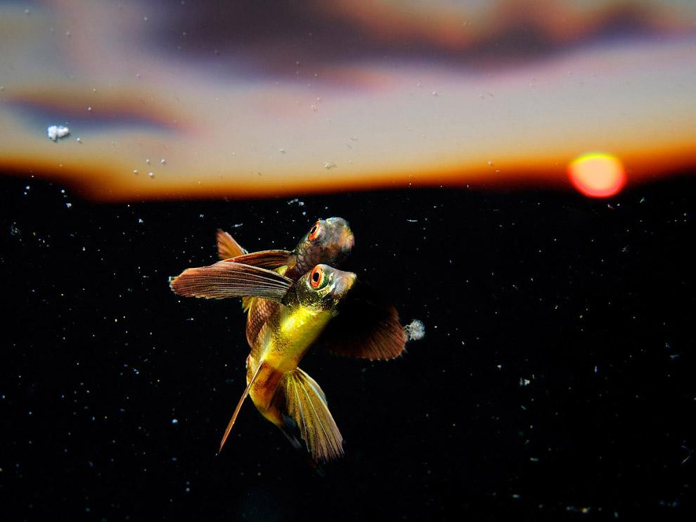 Швейцария: рыбки