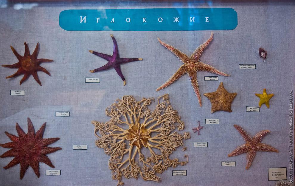 Беломорская биологическая станция