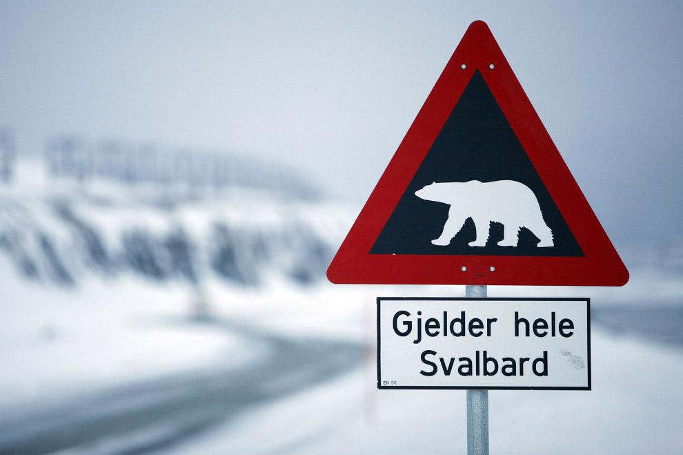 Знак, предупреждающий об опасности встречи с белыми медведями