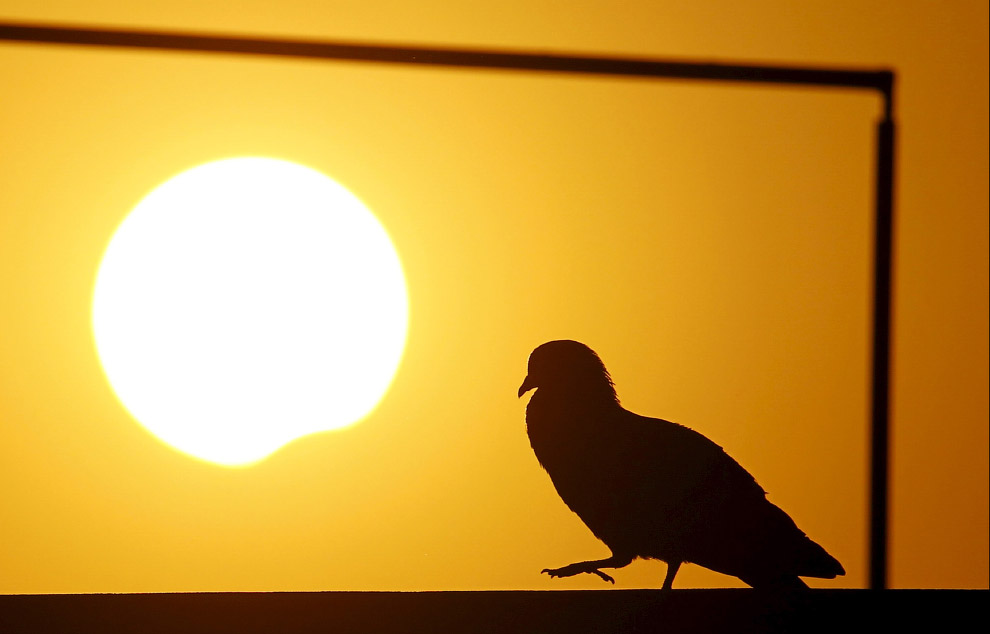 Солнечное затмение 2016 и голубь, Катманду, Непал