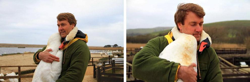 Лебедь и его спаситель