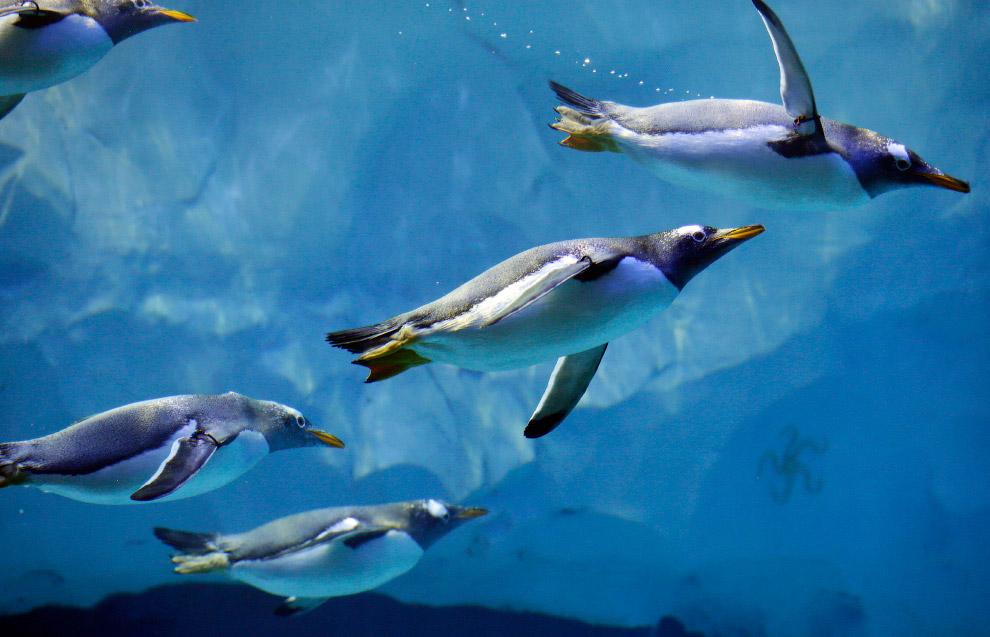 Пингвины в зоопарке Детройта