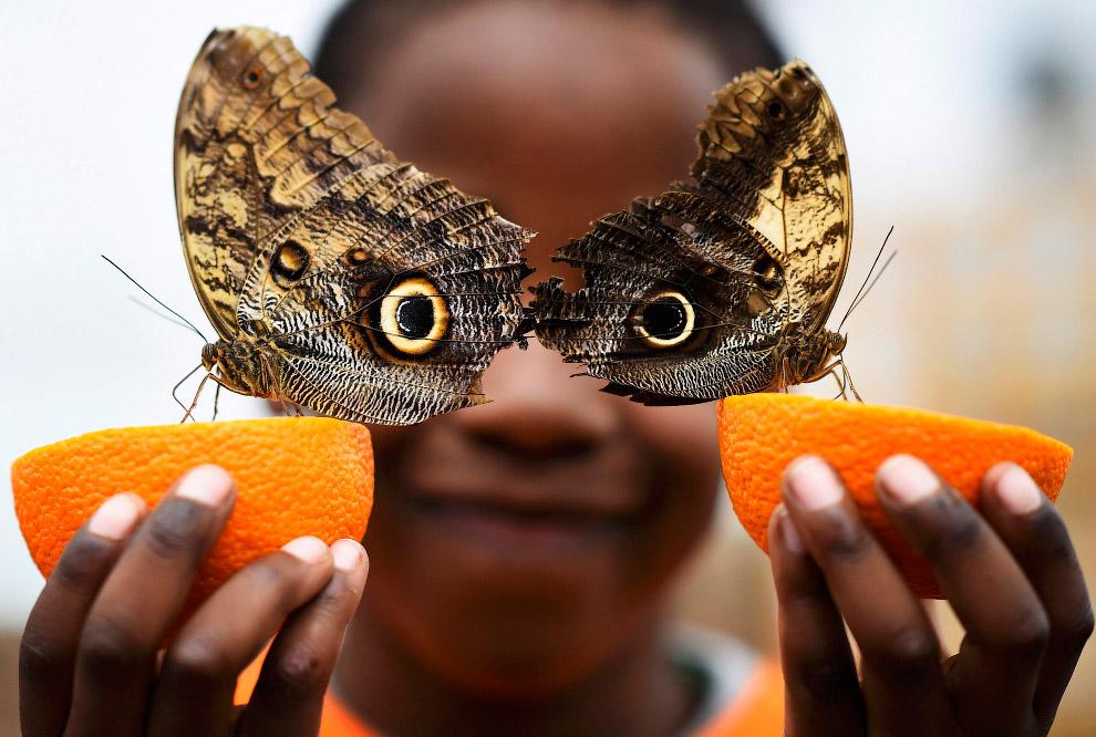 Выставка бабочек в Лондоне, Великобритания