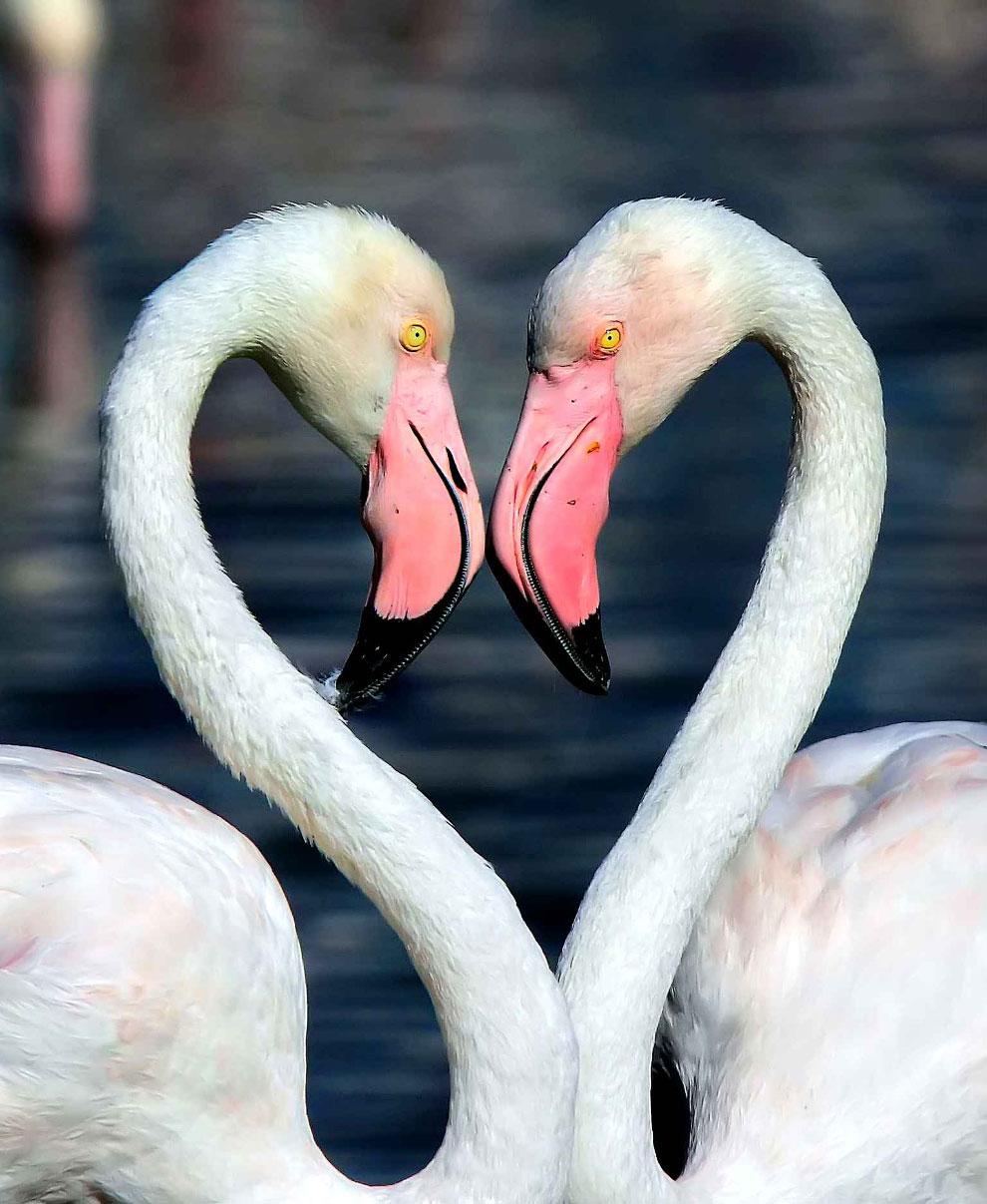 Пара фламинго создать в Дубае