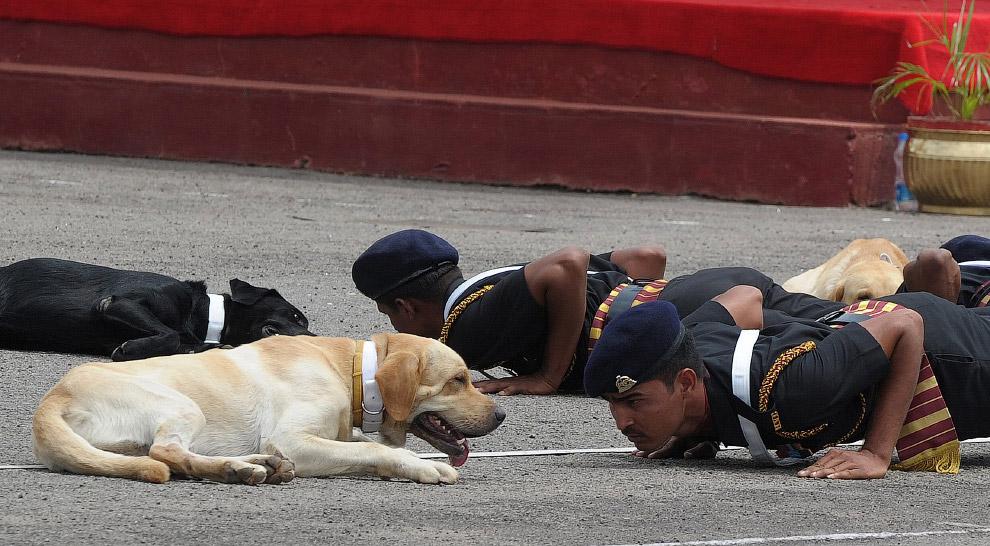 Собаки-солдаты из Индии на тренировке